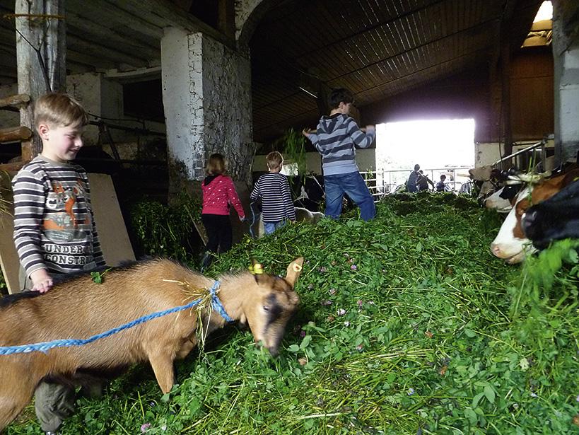Füttern der Ziegen
