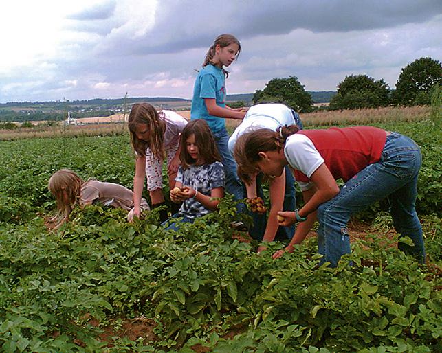Kartoffelernte der Kinder