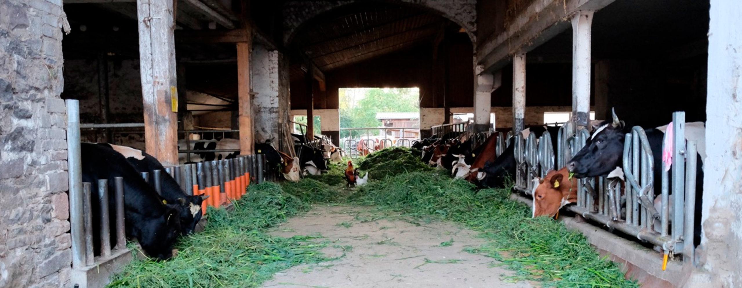 Biobauernhof - Blick in den Stall