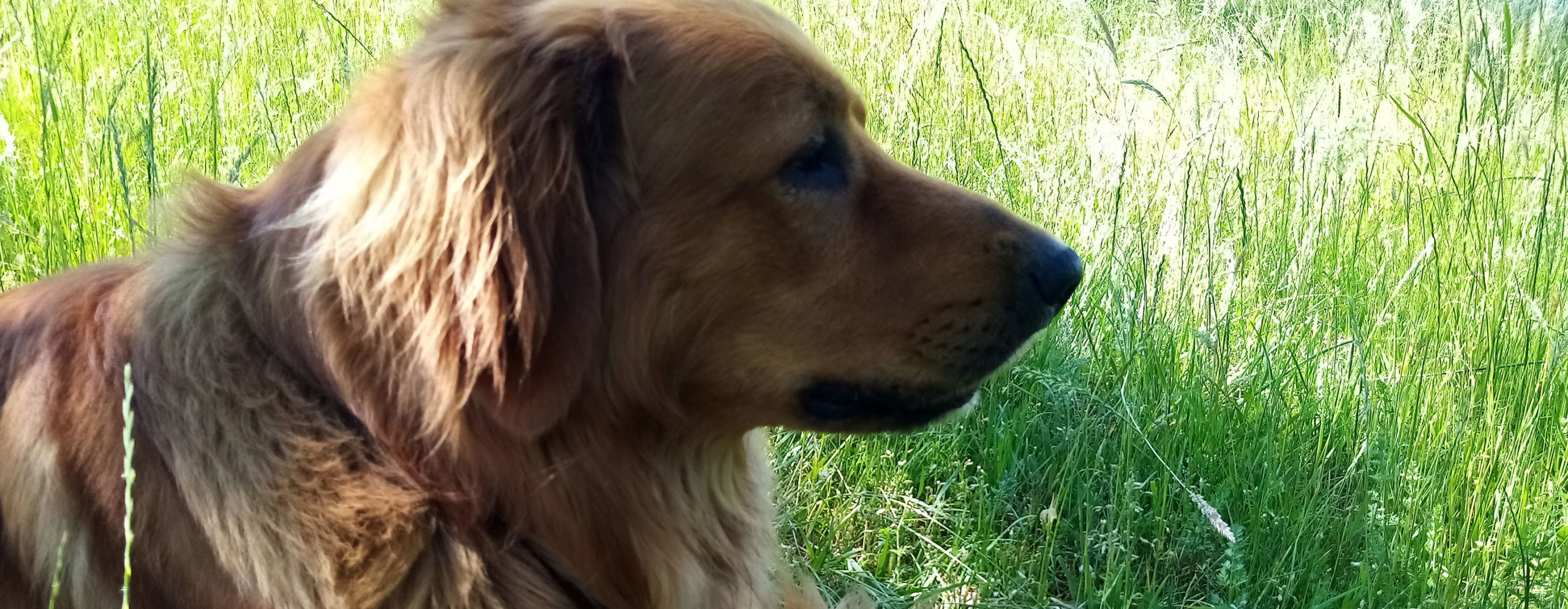 Hund Cajo